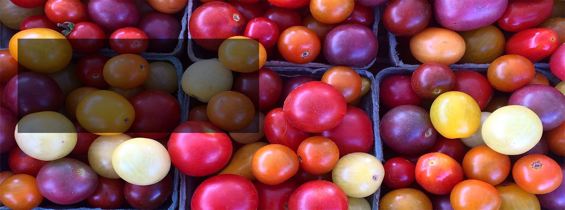 Read more about our CSA options, including the Veggie Box.